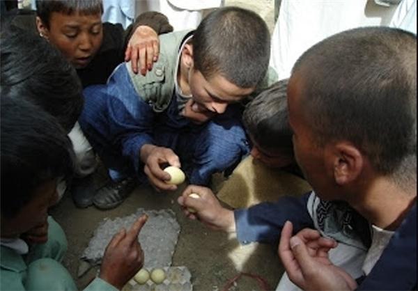 تخمجنگی , افغان تراول afghantravelaf
