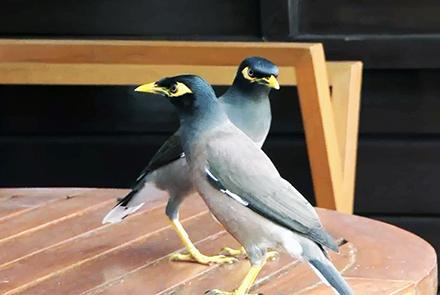 نگرانیها از قاچاق پرندهگان نایاب به کشورهای خارجی , افغان تراول afghantravelaf