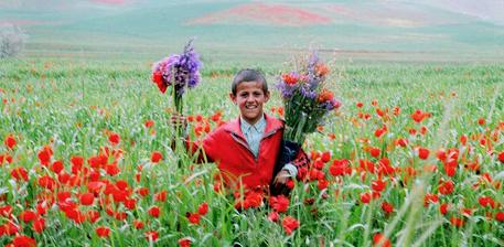 میله گل سرخ , افغان تراول afghantravelaf