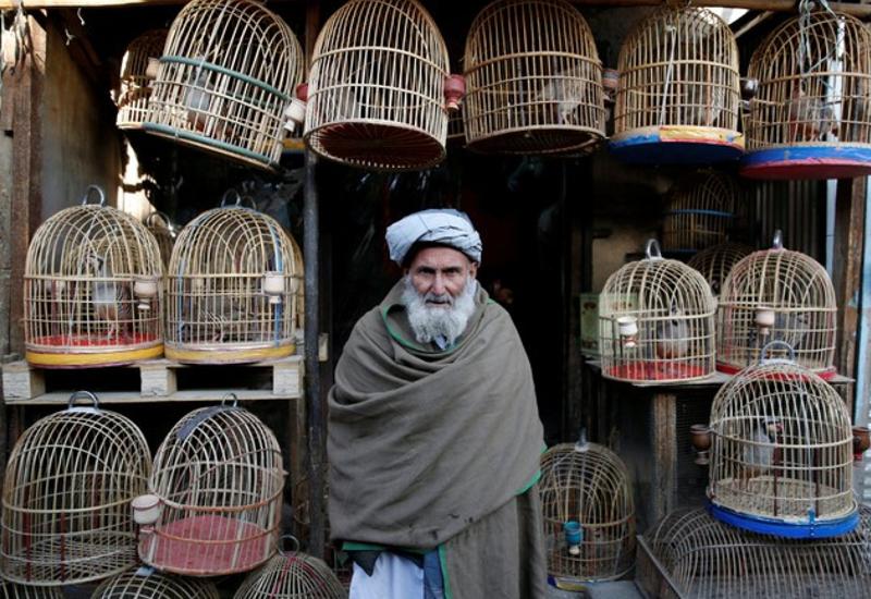 کوچه کاه فروشی کابل؛ محلی برای خرید و فروش پرندگان , افغان تراول afghantravelaf